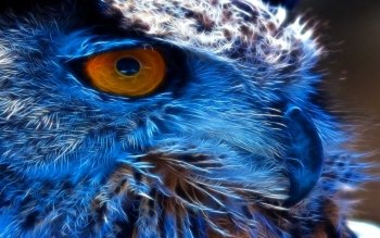 Animal - Owl Wallpapers and Backgrounds ID : 145359