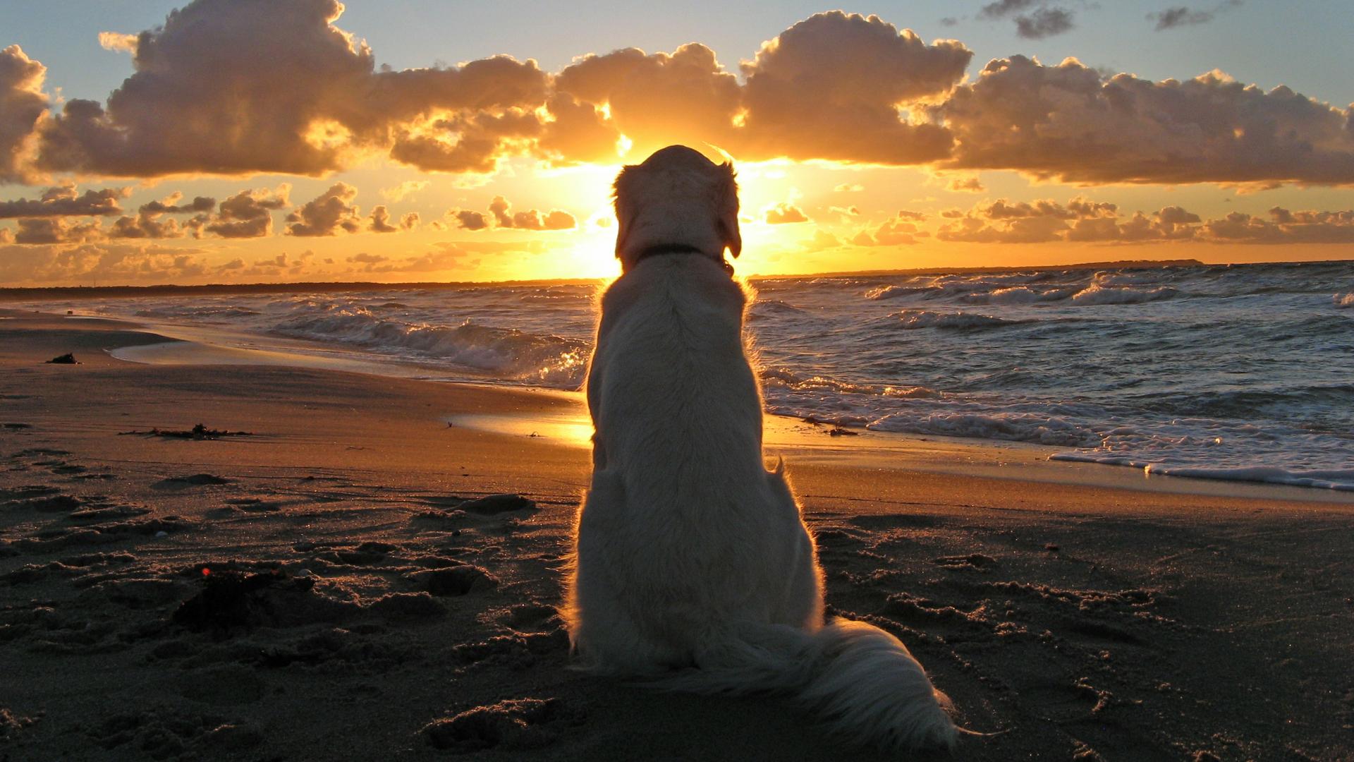 Animales - Perro  Fondo de Pantalla