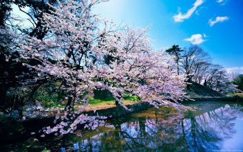 Earth - Blossom Wallpapers and Backgrounds ID : 150985