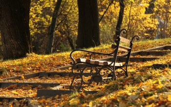 Photography - Autumn Wallpapers and Backgrounds ID : 155099