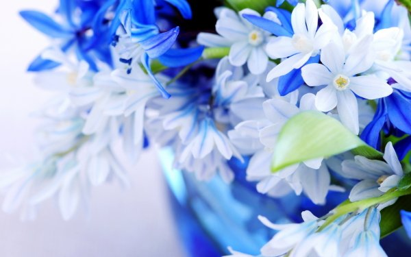 Terre/Nature Fleur Fleurs Pastel Fond d'écran HD | Image