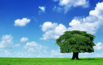 Earth - Tree Wallpapers and Backgrounds ID : 16347