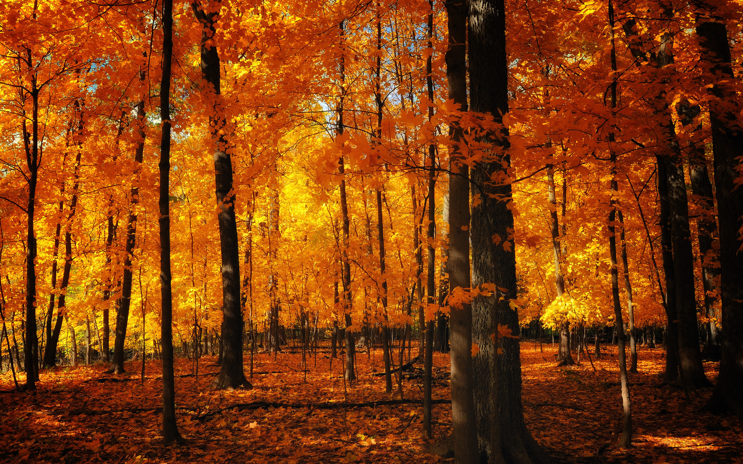 Fall Full HD Wallpaper and Background   2560x1600   ID:165855