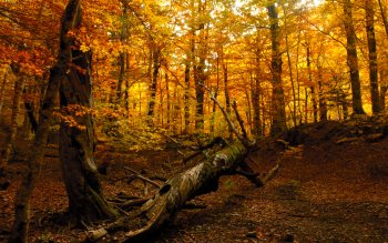 Earth - Autumn Wallpapers and Backgrounds ID : 165257