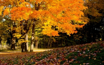 Earth - Autumn Wallpapers and Backgrounds ID : 165295