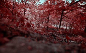 Earth - Autumn Wallpapers and Backgrounds ID : 16687