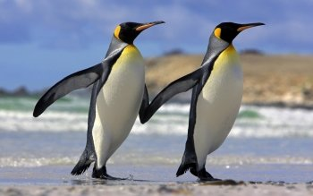 Animal - Penguin Wallpapers and Backgrounds ID : 169769