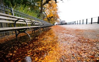 Photography - Autumn Wallpapers and Backgrounds ID : 173617