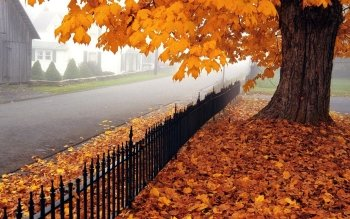 Photography - Autumn Wallpapers and Backgrounds ID : 174287
