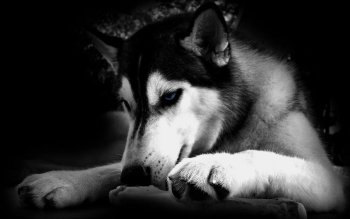Animal - Dog Wallpapers and Backgrounds ID : 175057