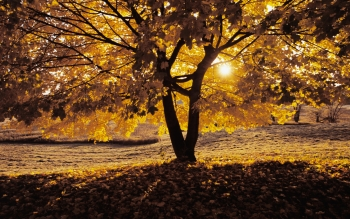 Earth - Autumn Wallpapers and Backgrounds ID : 175559