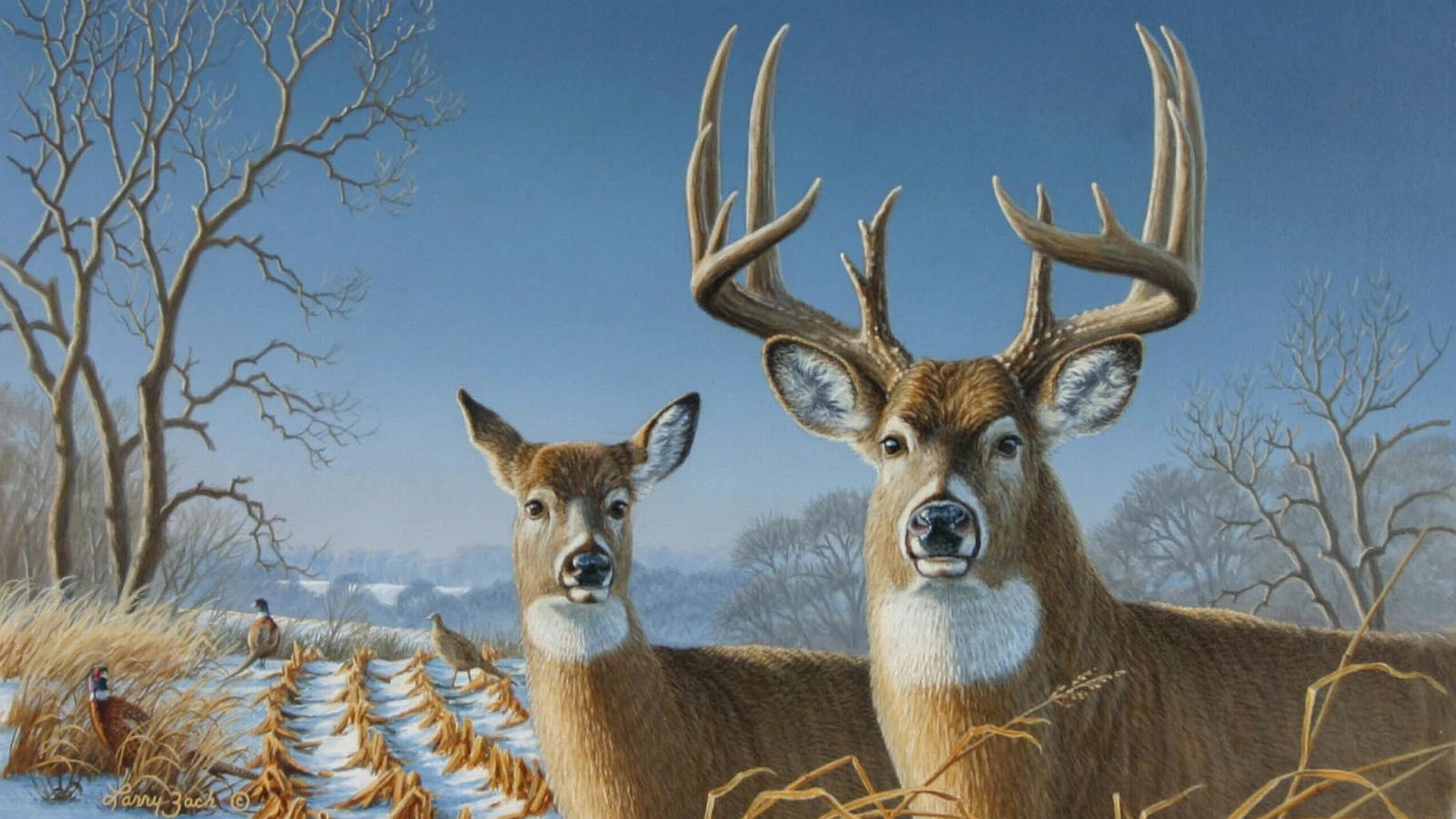 animal deer wallpaper 1920x1080 - photo #4