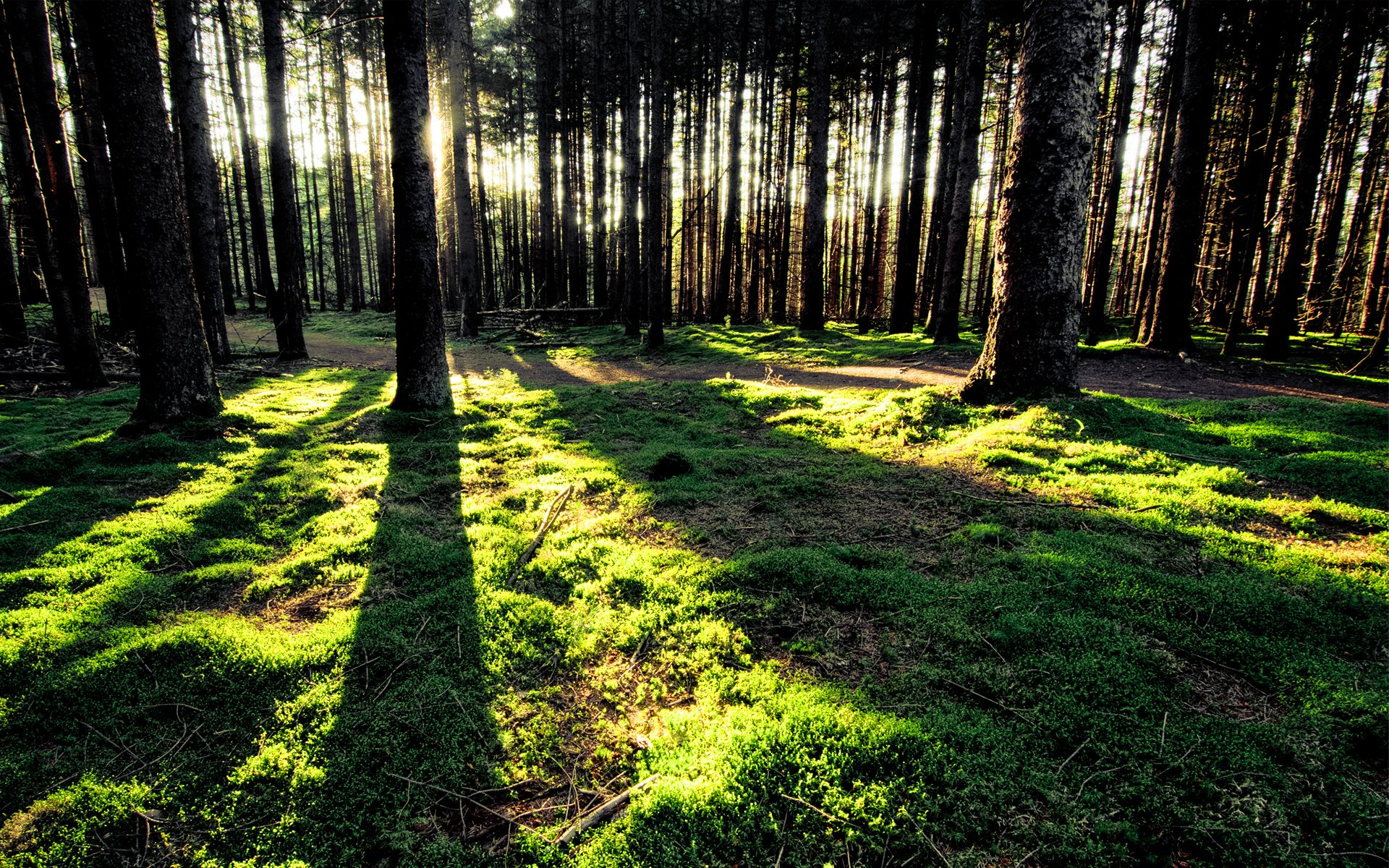 Wald Hd