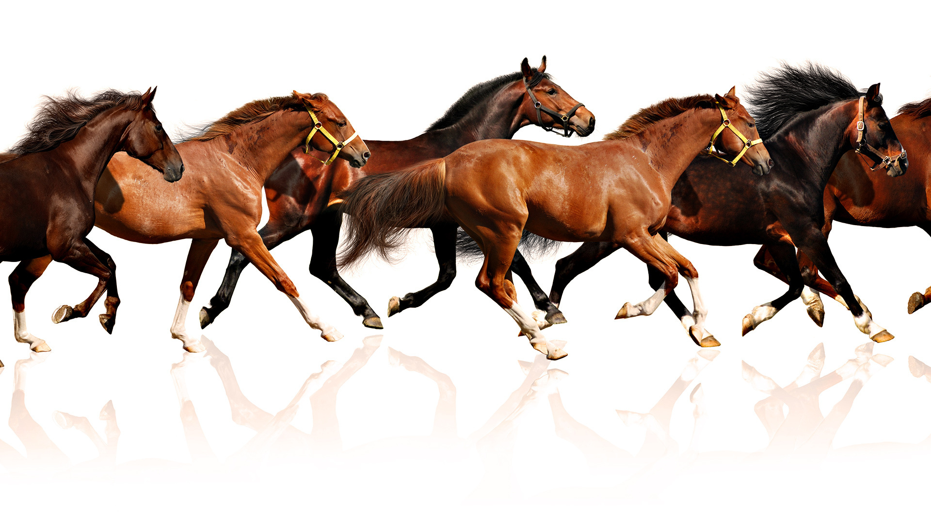Horse Hd Wallpaper Background Image 1920x1080 Id 177185