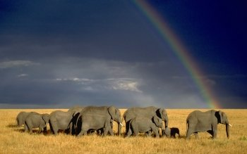 Tier - Elefant Wallpapers and Backgrounds ID : 177375