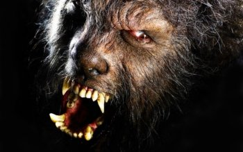 Donker - Werewolf Wallpapers and Backgrounds ID : 178659