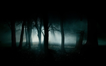Dark - Forest Wallpapers and Backgrounds ID : 186245