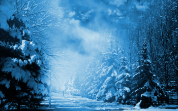 Photography - Winter Wallpapers and Backgrounds ID : 189749