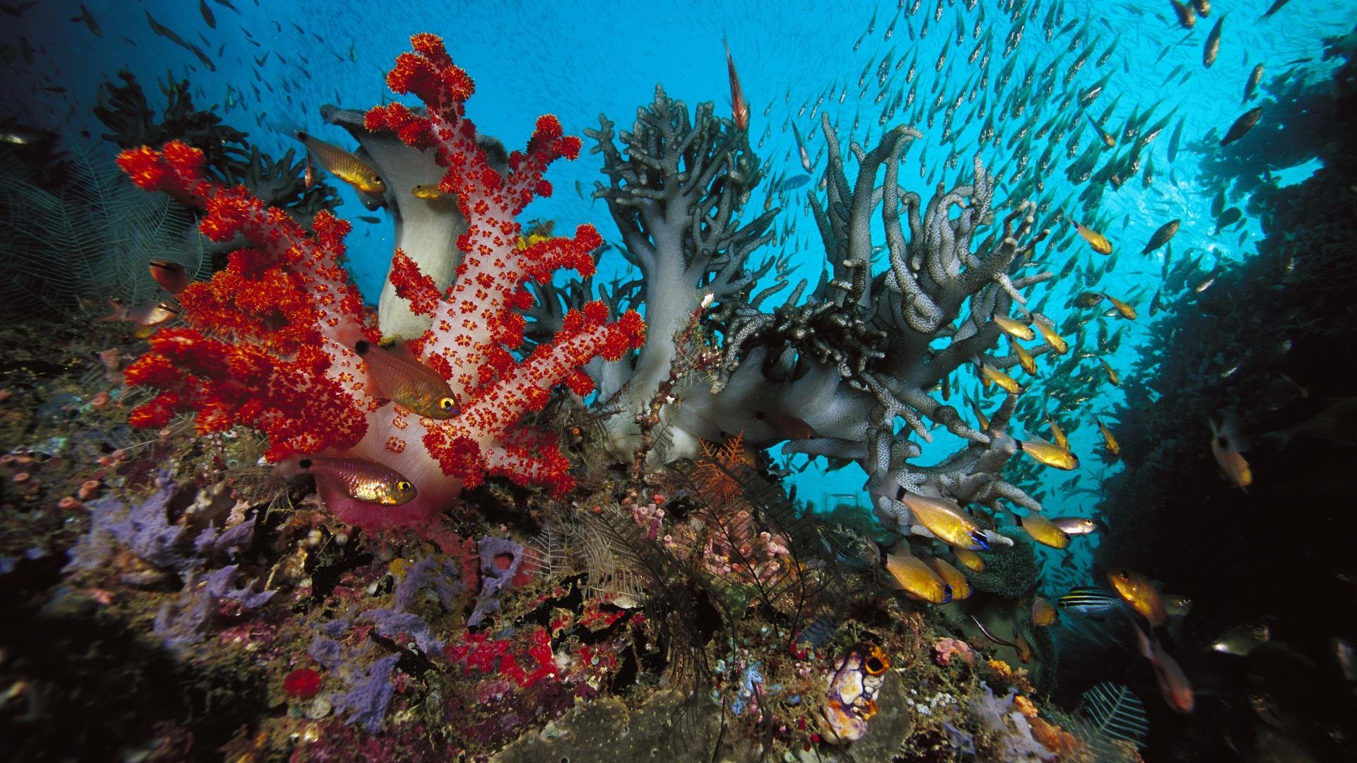 Sea Life Hd Wallpaper Background Image 1920x1080 Id 190965