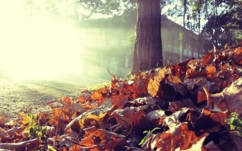 Photography - Autumn Wallpapers and Backgrounds ID : 190579