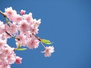Preview Blossom