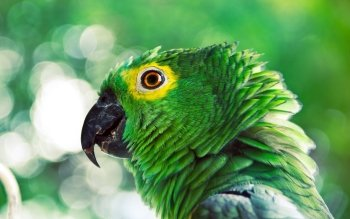 Animal - Parrot Wallpapers and Backgrounds ID : 191125