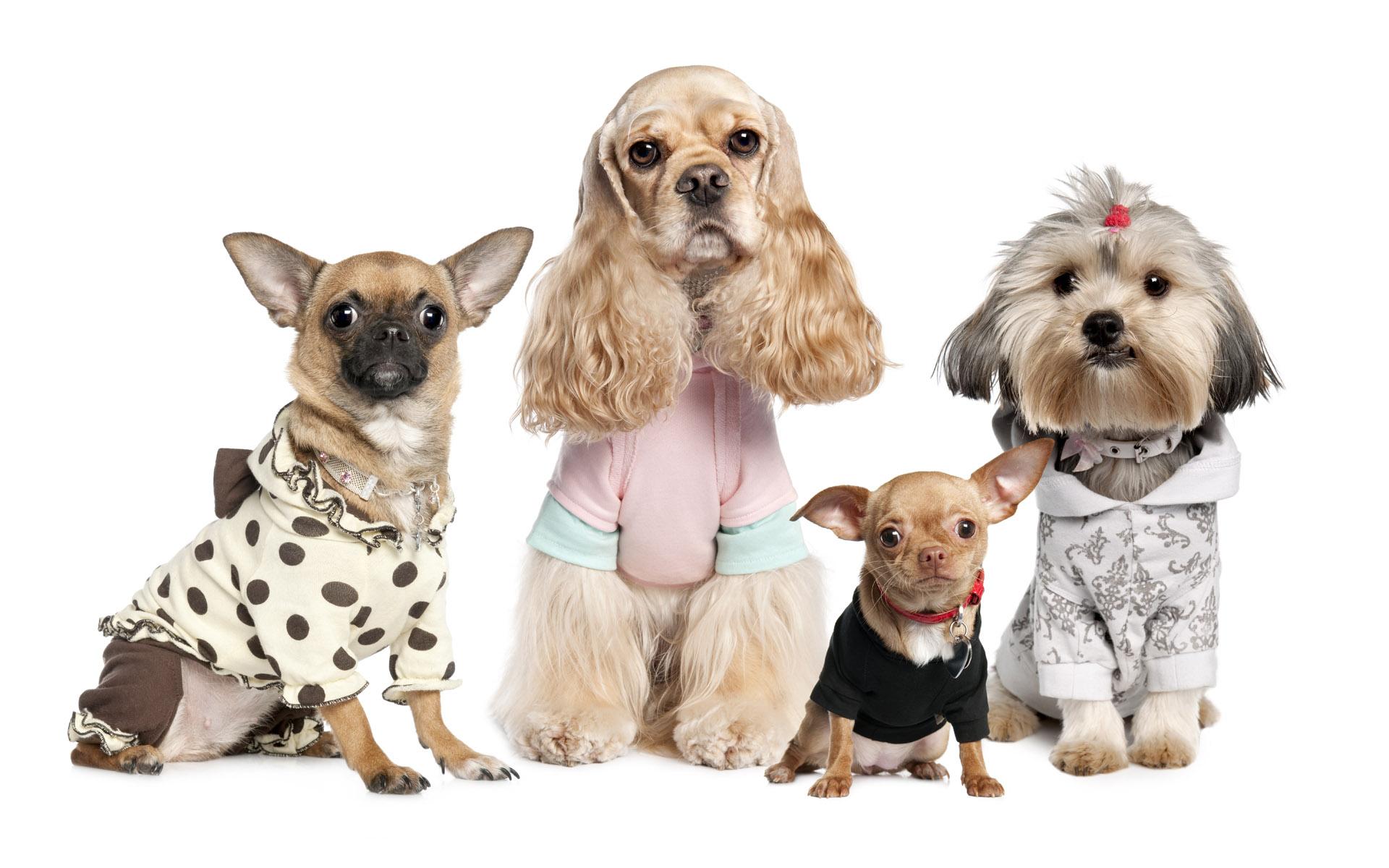 Funny Dog Wallpaper Animal - Dog Wallpaper