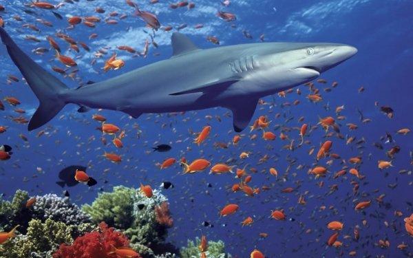 Animal Shark Sharks Dolphin HD Wallpaper | Background Image