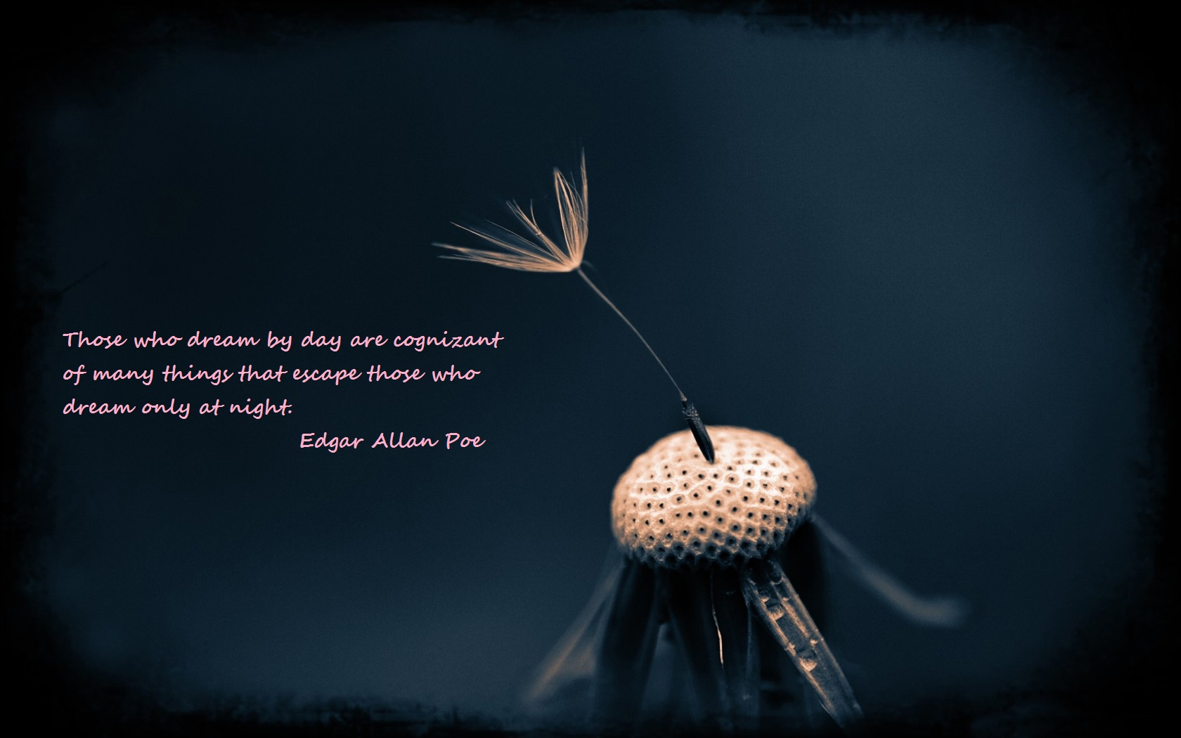 Misc - Quote  Edgar Allen Poe Wallpaper
