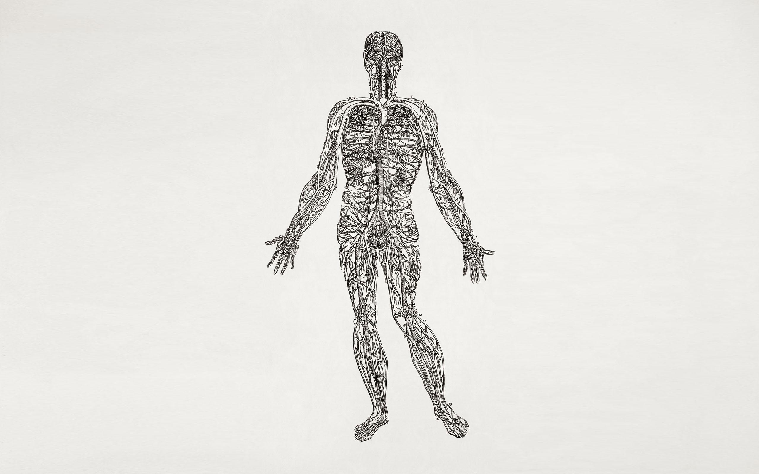 Anatomy HD Wallpaper | Background Image | 2560x1600 | ID:200557 ...