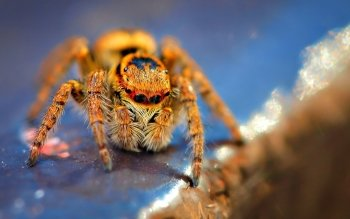 Animalia - Araña Wallpapers and Backgrounds ID : 200305