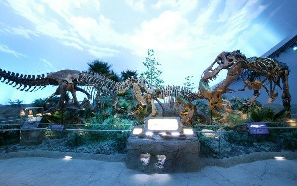 Djur Dinosaur Skeleton Fossil HD Wallpaper | Background Image