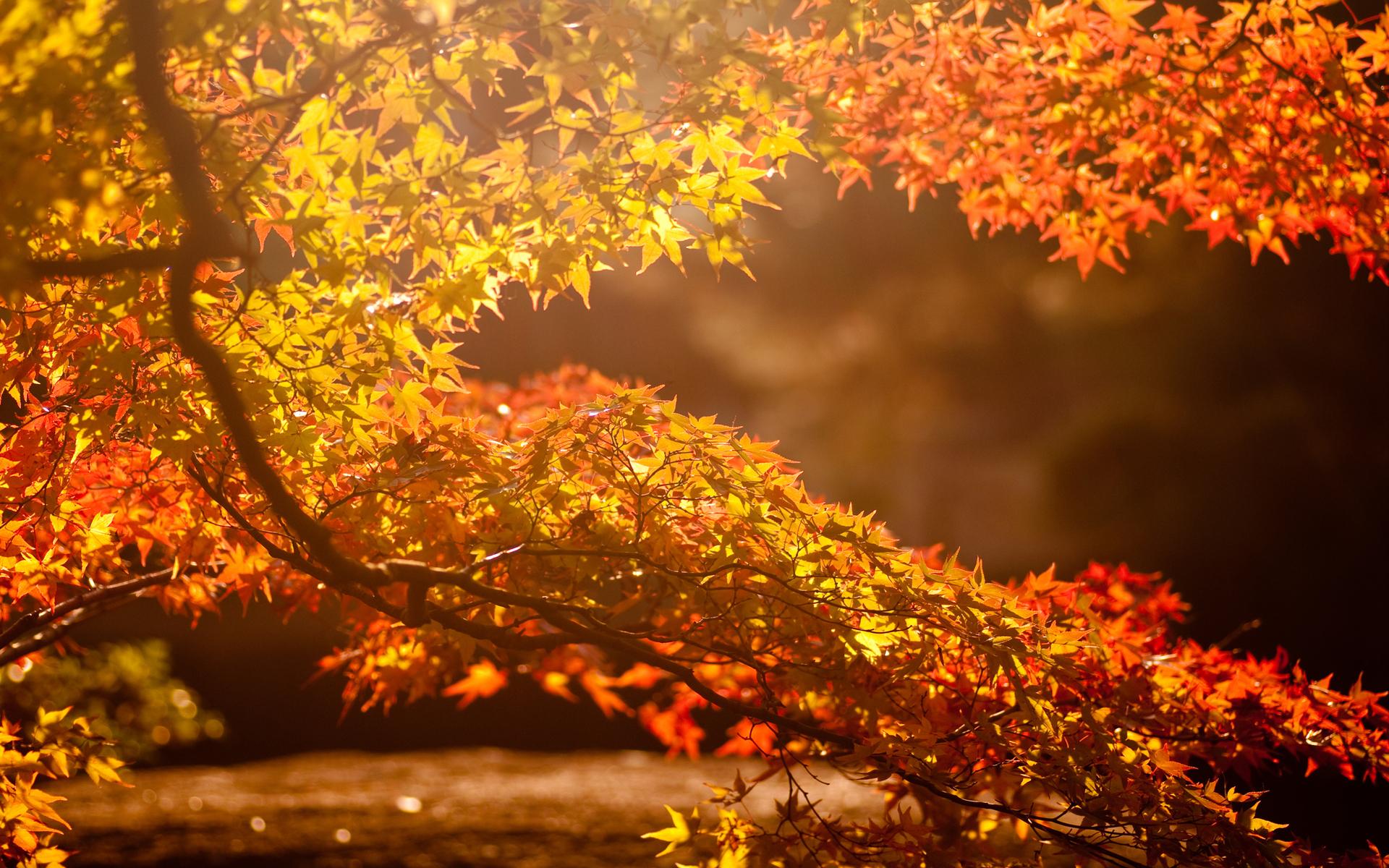 fun fall wallpaper - photo #8