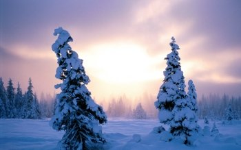 Tierra - Winter Wallpapers and Backgrounds ID : 20335