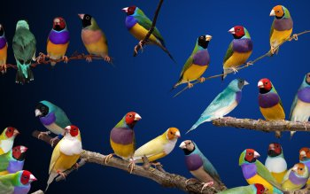 Animal - Bird Wallpapers and Backgrounds ID : 205265