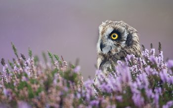 Animal - Owl Wallpapers and Backgrounds ID : 206137