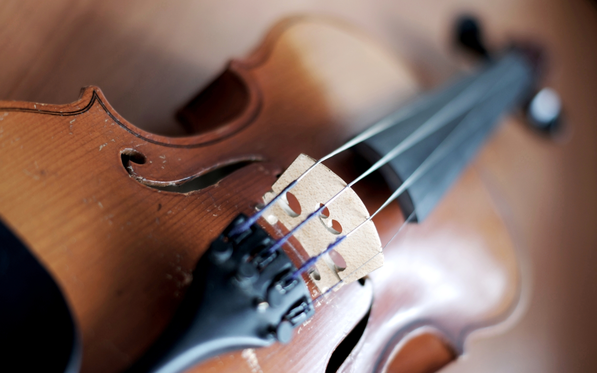 Violin Full HD Wallpaper and Background Image | 1920x1200 ...