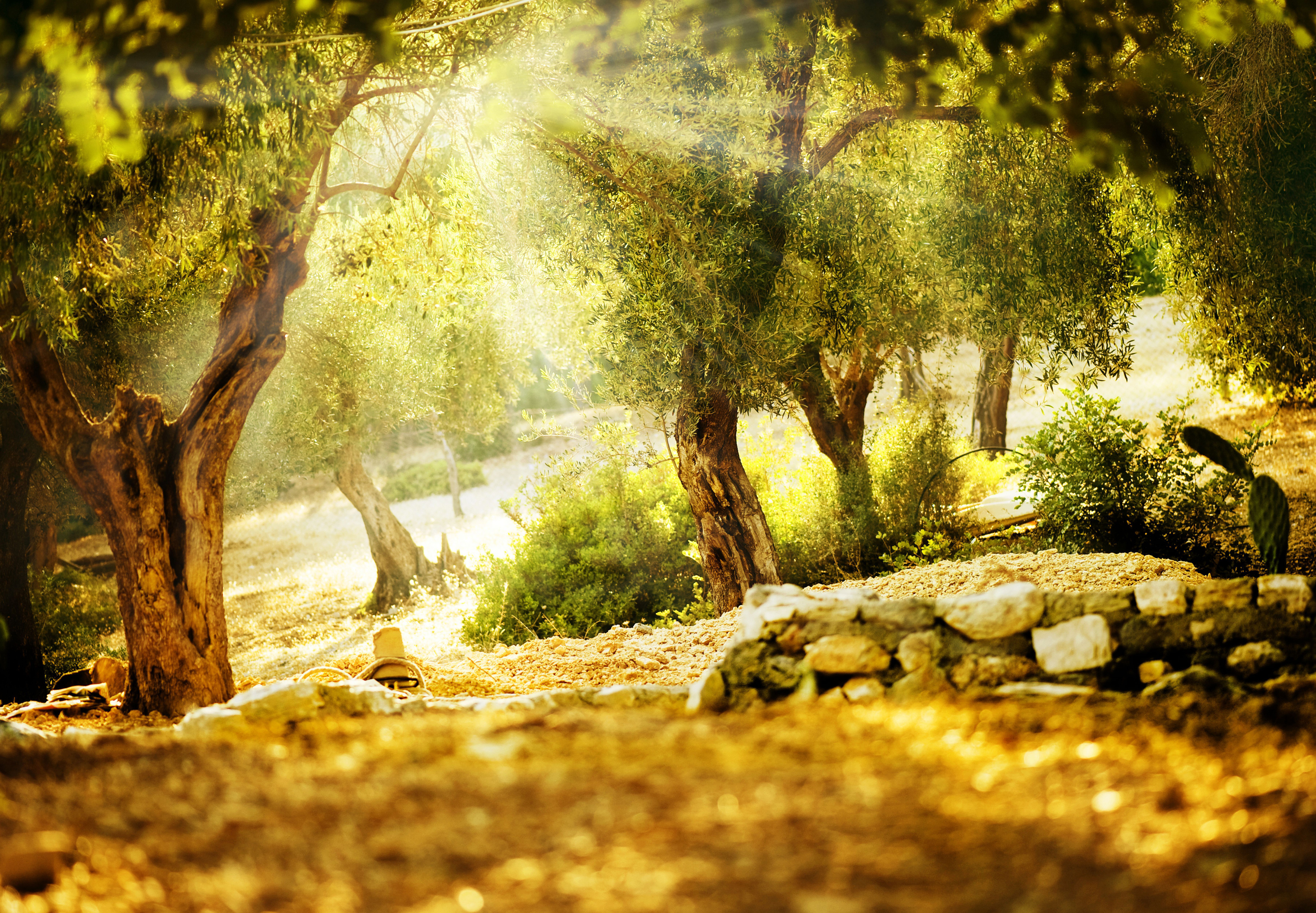 Sunbeam Full HD Wallpaper And Background Image