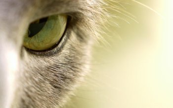 Animal - Cat Wallpapers and Backgrounds ID : 209115