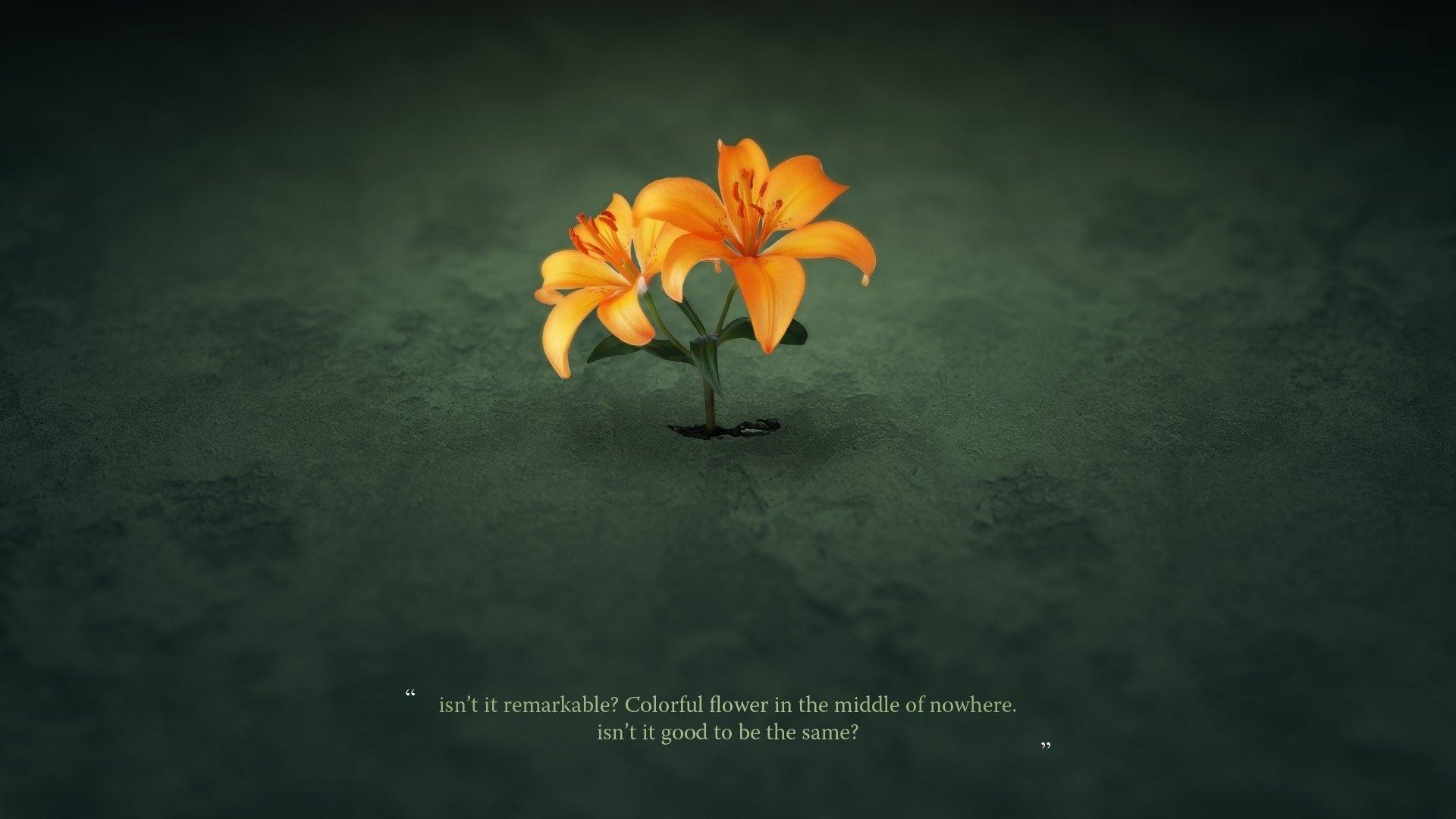 Artistic - Flower  Lily Wallpaper