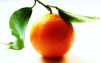 Food - Orange Wallpapers and Backgrounds ID : 210717