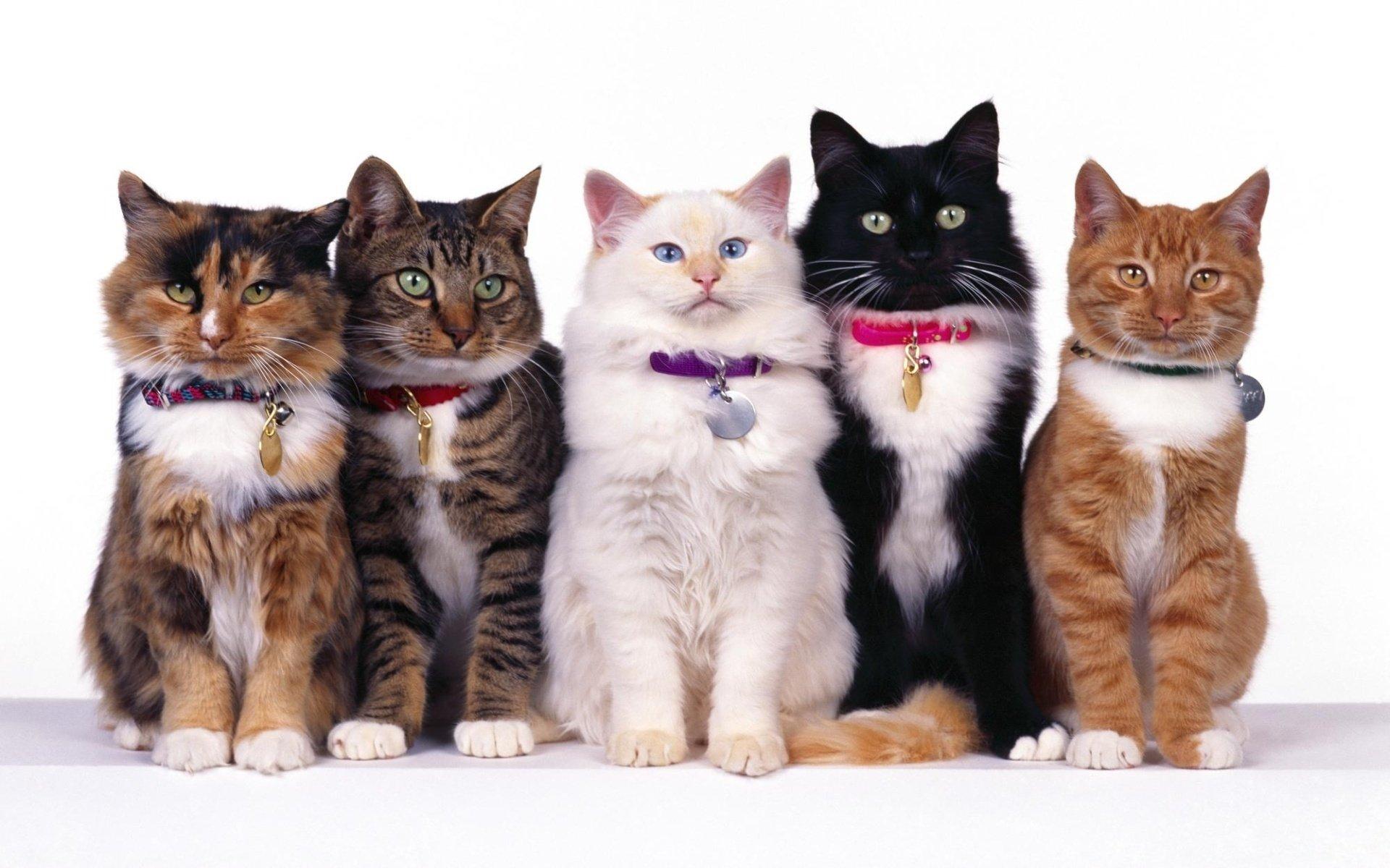 Animal - Cat  Wallpaper