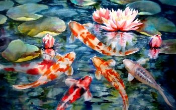 Animal - Koi Wallpapers and Backgrounds ID : 211355