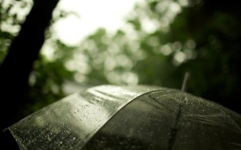 Fotografie - Rain Wallpapers and Backgrounds ID : 213457
