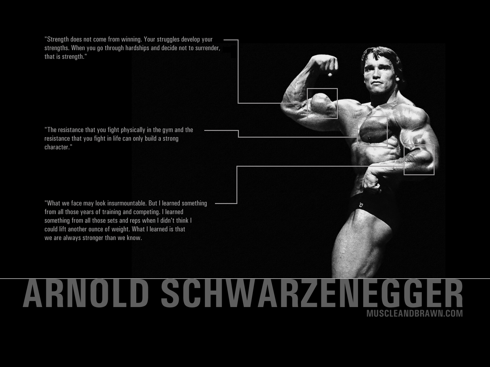 Sports   Bodybuilding Wallpaper