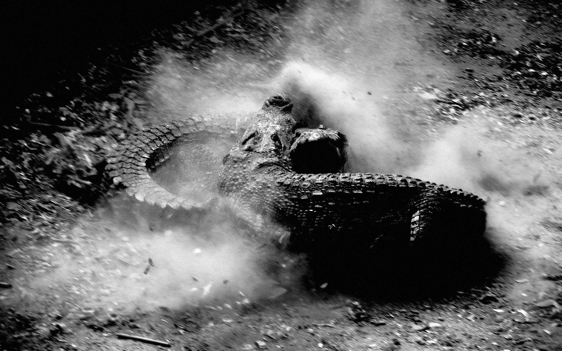 Crocodile Hd Wallpaper Background Image 1920x1200 Id