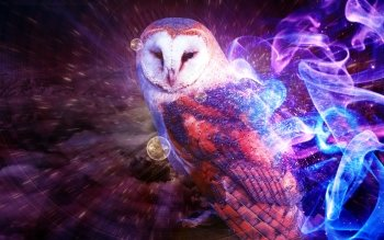 Animal - Owl Wallpapers and Backgrounds ID : 215205