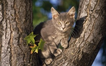 Animal - Cat Wallpapers and Backgrounds ID : 215975