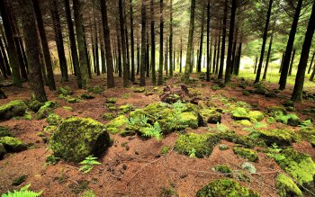Erde - Wald Wallpapers and Backgrounds ID : 216757