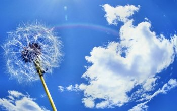 Earth - Dandelion Wallpapers and Backgrounds ID : 217385